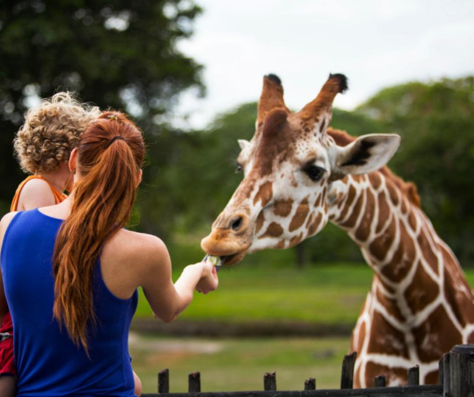 Kendall- zoo 2